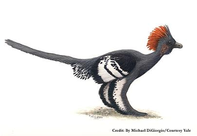 Reconstitution d`Anchiornis huxleyi