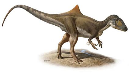 Reconstitution de Concavenator corcovatus