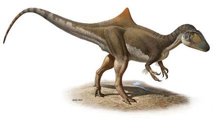 Reconstitution de Concavenator corcovatus