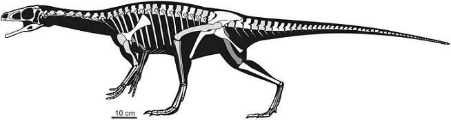 Panphagia protos, un sauropodomorphe omnivore d`Argentine