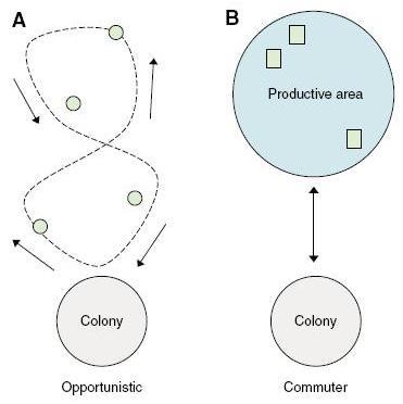 Illustration des deux stratégies de foraging chez les oiseaux de mer
